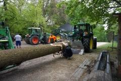 Maibaum 2019: Baum holen im Wald