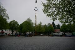 Maibaum 2019: Noch steht der Maibaum alleine auf dem Rathauspatz